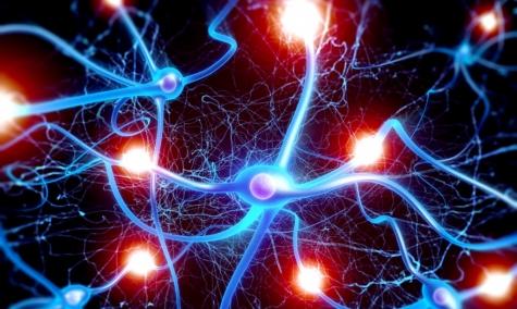 Il cervello anziano si rigenera come quello giovane