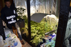 Marijuana. Rinvenuta coltivazione indoor con sistema grow room