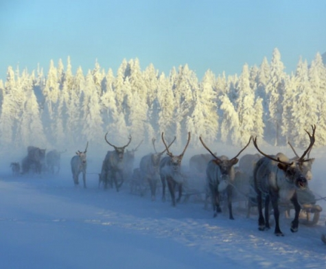 Orrore in Russia, ritrovate nella neve 54 mani mozzate